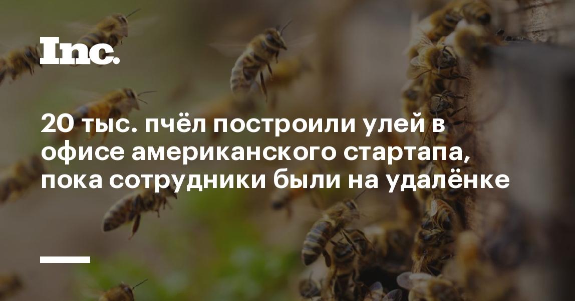 20 тыс. пчёл построили улей в офисе американского стартапа, пока сотрудники были на удалёнке